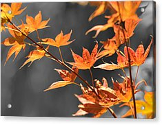 Autumn Leaves  Acrylic Print by Sandy Fisher