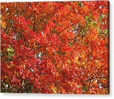 Autumn Leaves Acrylic Print by Shawn Hughes