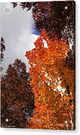 Autumn Looking Up Acrylic Print by Mick Anderson
