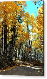 Autumn Magic Acrylic Print by Lynn Bawden