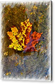 Acrylic Print featuring the digital art Autumn Maple Leaf In Water by Debbie Portwood
