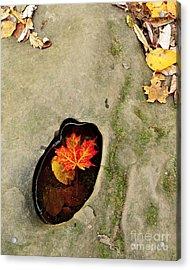 Autumn Maple Leaf Acrylic Print by Matt Tilghman