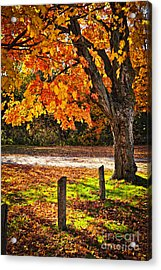 Autumn Maple Tree Near Road Acrylic Print by Elena Elisseeva