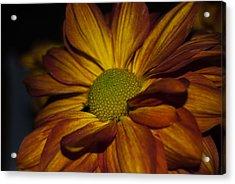 Acrylic Print featuring the photograph Autumn Mum by Judy Hall-Folde