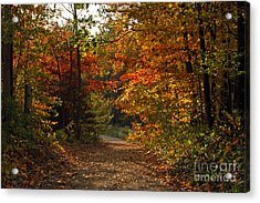 Autumn Nature Trail Acrylic Print by Cheryl Cencich