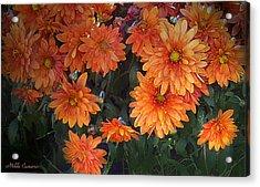 Autumn Orange Flowers Acrylic Print by Mikki Cucuzzo