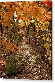 Autumn Path Acrylic Print by Raymond Earley