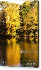 Autumn Pond Acrylic Print by Leslie Leda