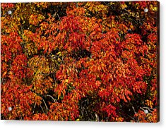 Autumn Red Acrylic Print by Garry Gay