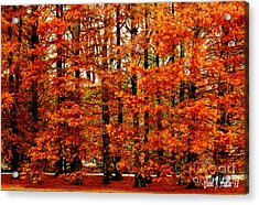 Autumn Red Maple Landscape Acrylic Print