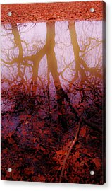 Autumn Reflections  Acrylic Print by Xoanxo Cespon