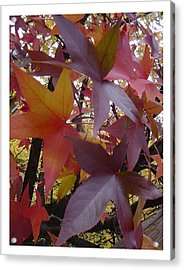 Autumn Rhapsody Acrylic Print by Frank Wickham