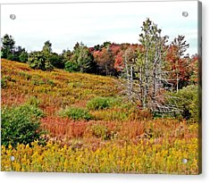 Acrylic Print featuring the photograph Autumn Riot by Christian Mattison