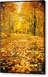 Autumn Road Acrylic Print by Darren Fisher