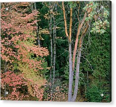 Autumn Scene Acrylic Print by Mark Greenberg