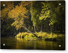 Autumn Scene Of The Little Manistee River In Michigan No. 0880 Acrylic Print