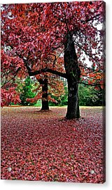 Acrylic Print featuring the photograph Autumn by Scott Holmes
