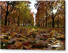 Autumn Sheets Carpet Acrylic Print by Bruno Santoro
