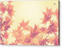 Autumn Sky Acrylic Print by Amy Tyler
