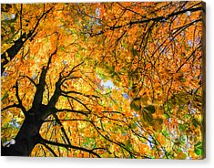 Autumn Sky Acrylic Print by Hannes Cmarits