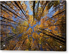 Autumn Sky Acrylic Print by Mircea Costina Photography