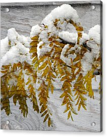 Acrylic Print featuring the photograph Autumn Snow by Michelle Frizzell-Thompson