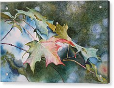 Autumn Sparkle Acrylic Print by Patsy Sharpe