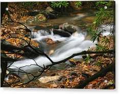 Acrylic Print featuring the photograph Autumn Spring by Joan Bertucci