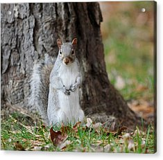 Autumn Squirrel Acrylic Print