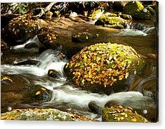 Autumn Stream Acrylic Print by Lena Auxier