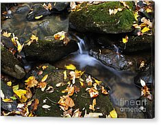 Autumn Stream Monongahela National Forest Acrylic Print by Thomas R Fletcher