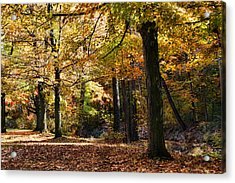 Autumn Stroll Acrylic Print by Peter Chilelli