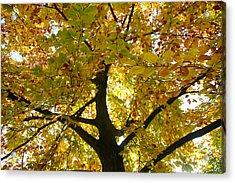 Autumn Sun Acrylic Print by Karen Grist