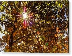 Autumn Sunburst Acrylic Print by Carolyn Marshall