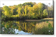 Autumn Sunlight On The Pond Acrylic Print