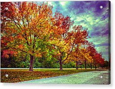 Autumn Tree Line At Busch Acrylic Print by Bill Tiepelman