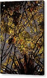 Autumn Trees IIi Acrylic Print by Dickon Thompson