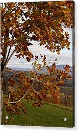 Autumn Trees Acrylic Print by Margaret Steinmeyer