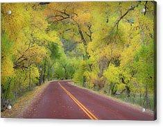 Autumn Trees On Road Acrylic Print by Royce Bair