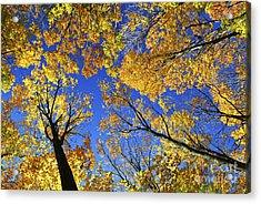 Autumn Treetops Acrylic Print by Elena Elisseeva