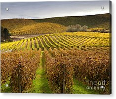 Autumn Vines Acrylic Print by Mike  Dawson