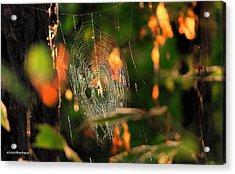 Autumn Web Acrylic Print by Sarai Rachel
