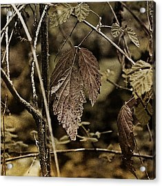 Autumn Whispers Acrylic Print by Bonnie Bruno
