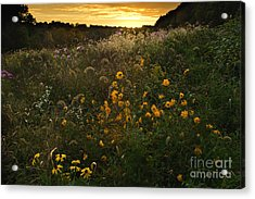 Autumn Wildflower Sunset - D007757 Acrylic Print by Daniel Dempster