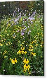 Autumn Wildflowers - D007762 Acrylic Print