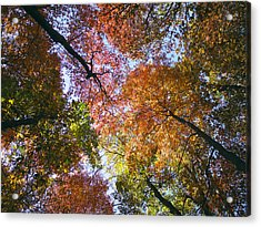 Autumnal Canopy Acrylic Print by Rob Amend
