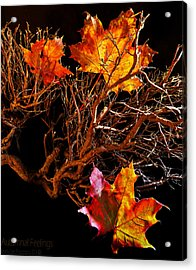 Acrylic Print featuring the photograph Autumnal Feelings by Beverly Cash