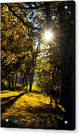 Autumnal Morning Acrylic Print by Bill Cannon