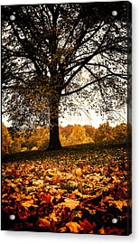 Acrylic Print featuring the photograph Autumnal Park by Lenny Carter