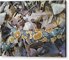 Acrylic Print featuring the photograph Autumns Art 2 by Gerald Strine